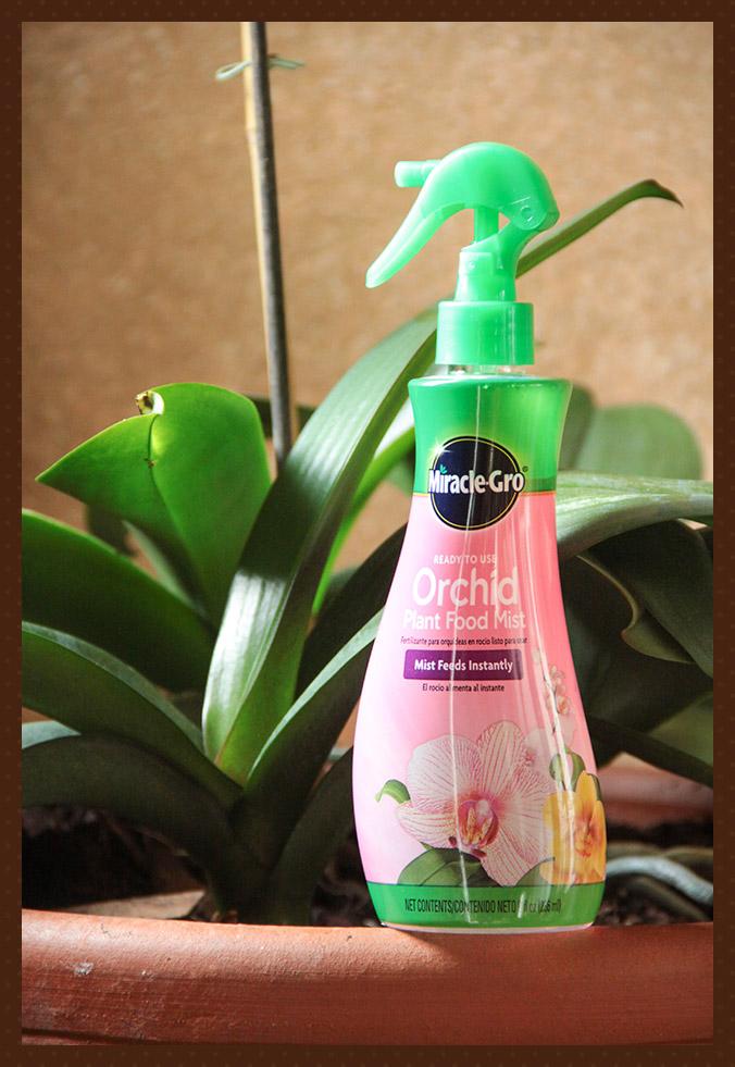 Orkidearavinne